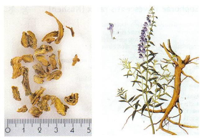 Scutellariae radix, HuangQin